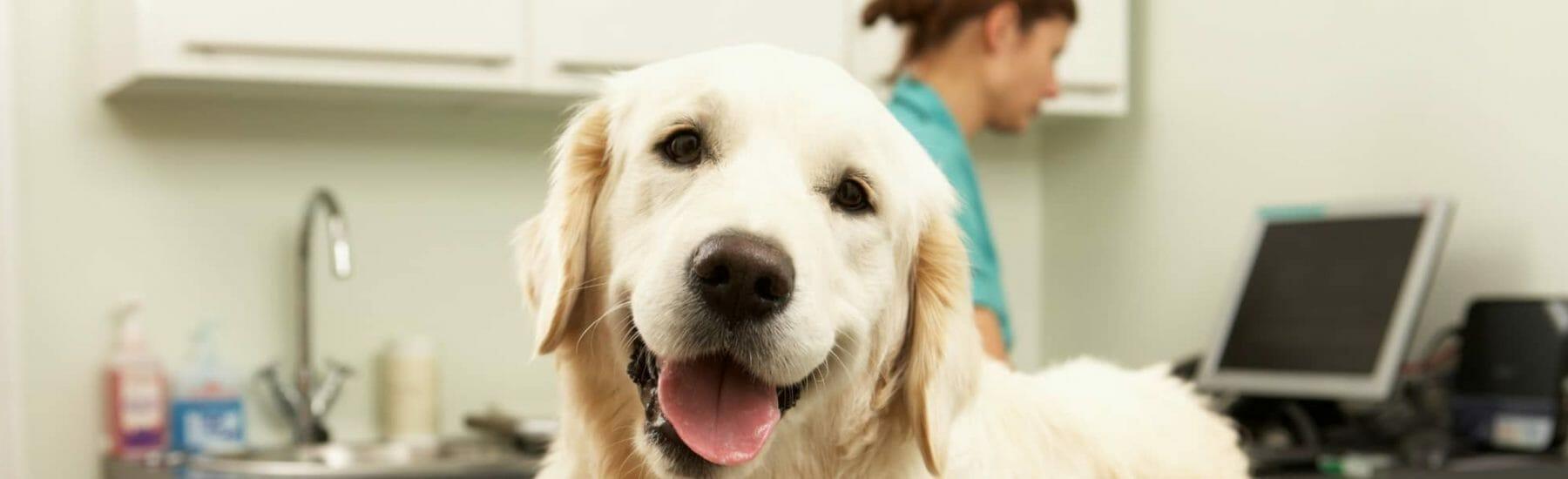 Veterinary Diagnostics Services