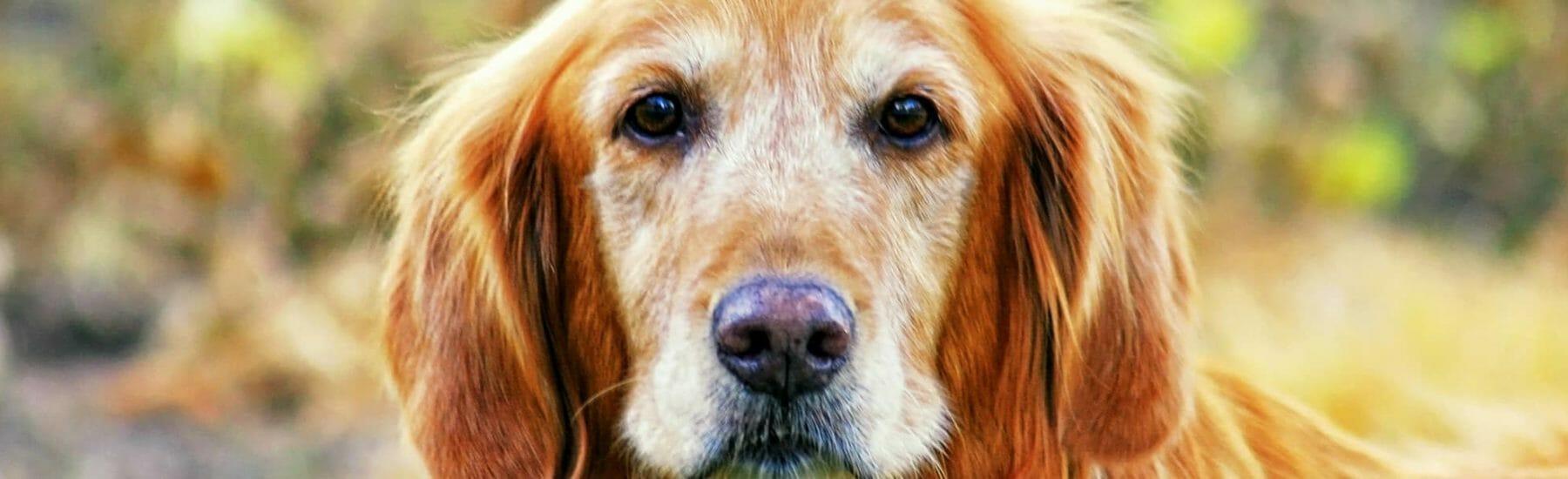 Senior Care for Pets