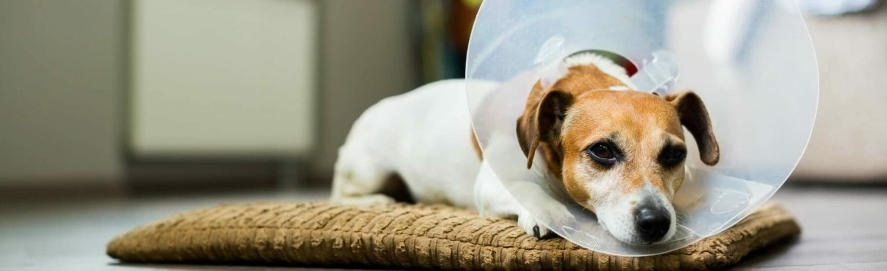 Endoscopy Services for Pets