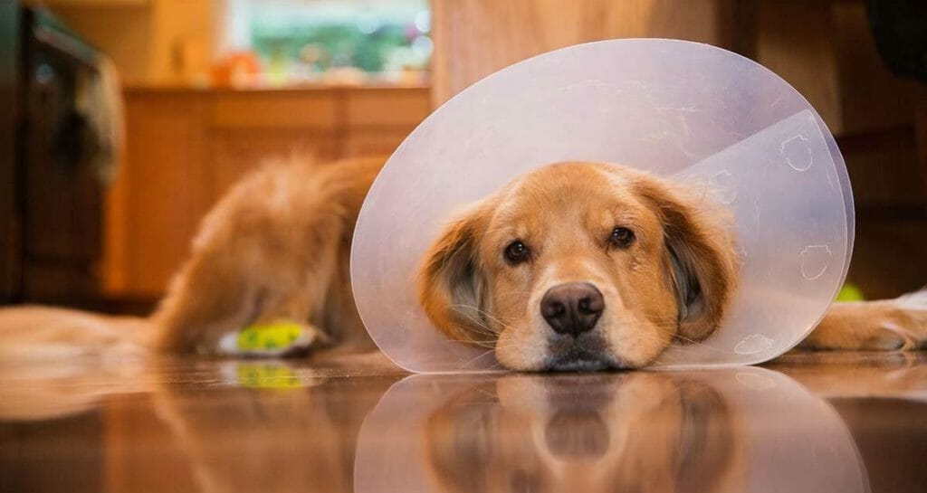 5 Signs It May Be Time to See a Veterinary